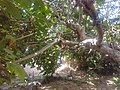PikiWiki Israel 54080 beit arussi ashkelon.jpg