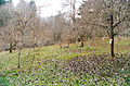 Piper Orchard row of trees 03.jpg