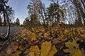 Pirkanmaa, Finland - panoramio (120).jpg