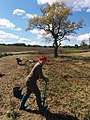 Planting Willow withies at Whistlewood.jpg