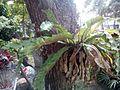 Plants in TJHS 02.jpg