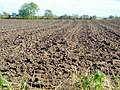 Ploughed Field at Kelhead - geograph.org.uk - 564835.jpg