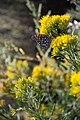 Pollinators0023 (39039154151).jpg