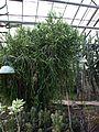 Poltava Botanical garden (04).jpg