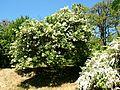 Poltava Botanical garden (121).jpg