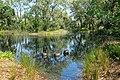 Pond - Bok Tower Gardens - DSC02103.jpg
