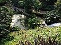 Pond below waterfall - geograph.org.uk - 1146254.jpg