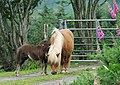 Pony and foal - geograph.org.uk - 491774.jpg