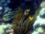 Port Ghalib march 2006-0161