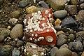 Port Orchard, WA - Harper Park - barnacled brick 01.jpg