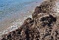 Posidònia a la vora de la platja del Mascarat, Altea.JPG
