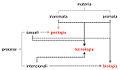 Possibili punti di vista sulla morfogenesi.jpg