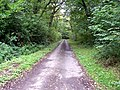Poundland Wood - geograph.org.uk - 57222.jpg