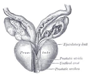 minél jobb eltávolítani a prosztatitis gyulladását Horsetail mező gyógyító tulajdonságok prosztatitis