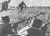 Ptrd-1941.jpg