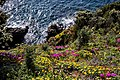 Punta Falcone 004.jpg