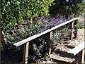 Purple Flowers 10-26-13 (10561304895).jpg