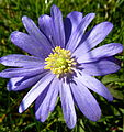 Purple flower (5523265483).jpg