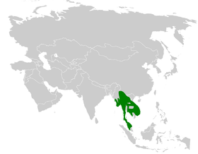 Pycnonotus finlaysoni distribution map.png