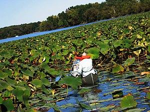 Pymatuning Laboratory of Ecology - Canoeing near the lab