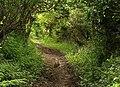 Rabbit on bridleway - geograph.org.uk - 1314120.jpg