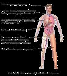 chemo și radiații cauzează pierderea în greutate