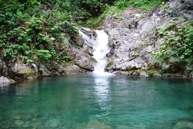 File:Rain forest.jpg