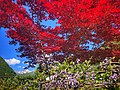 Red Sky in Valbondione.jpg