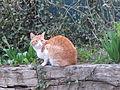 Red cat of Christiania.JPG