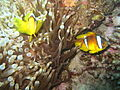 Red sea-reef 3623.jpg