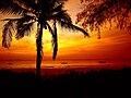 Red sunrise over palmtree and ocean.jpg