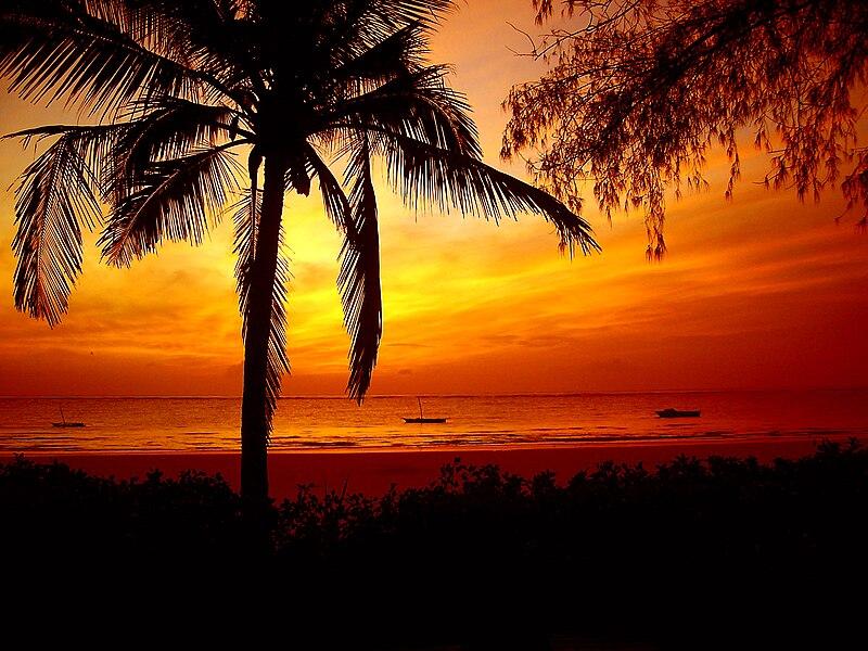 File:Red sunrise over palmtree and ocean.jpg