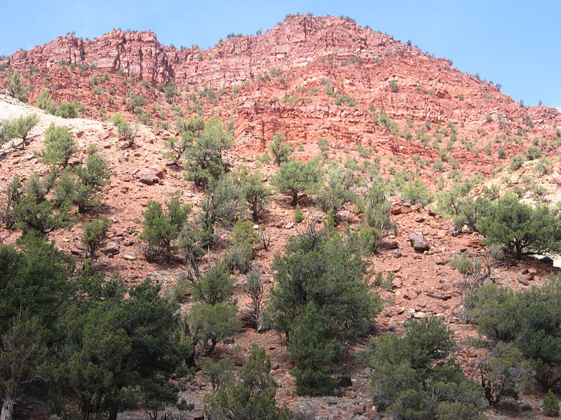 File:Redcanyon.JPG