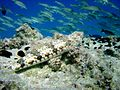 Reef0721 - Flickr - NOAA Photo Library.jpg