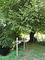 René (Sarthe) L'Ornette et le tilleul, arbre remarquable.jpg