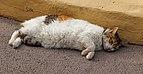 Resting Cat - Los Cancajos.jpg
