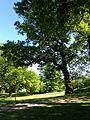 Risskov park 04.jpg