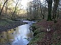 River Brock, Boggy wood - geograph.org.uk - 717878.jpg