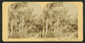 Robert Avenue, Palm Beach, Florida, from Robert N. Dennis collection of stereoscopic views.png