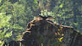 Rogue River Wildlife (15754344740).jpg
