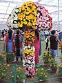 Rose festival Chandigarh-Wikimedians of The North India Photowalk Rose Festival, Chandigarh-February 2017 03.jpg