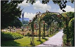 Rosengarten in Lörrach