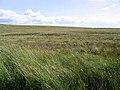 Rough grazing on Bedda Hill - geograph.org.uk - 520608.jpg