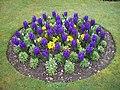 Round Flowerbed - geograph.org.uk - 1246891.jpg