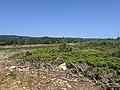 Sabinares rastreros de Alustante - Tordesilos (sabinas con troncos).jpg
