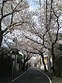 Sakuragaoka(Yokohama).JPG