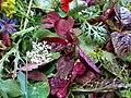 Saladmixofgreensandflowers.jpg