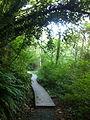 Saltwater State Park Trail 2.jpg