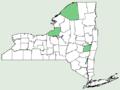 Salvia reflexa NY-dist-map.png