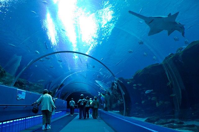 Aquarium Hotel Room Usa